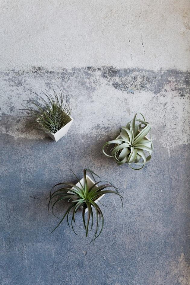 plants17